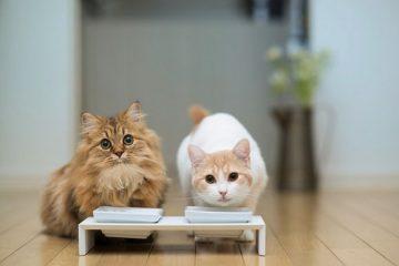 快乐萌猫的艺术生活 有趣的动物摄影