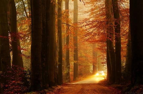 《童话一样的场景 壮观的森林美景》