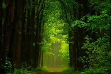 童话一样的场景 壮观的森林美景