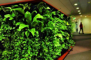 整洁的办公环境 办公室绿化设计