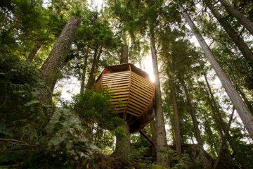创意森林小木屋 丛林中的秘密基地