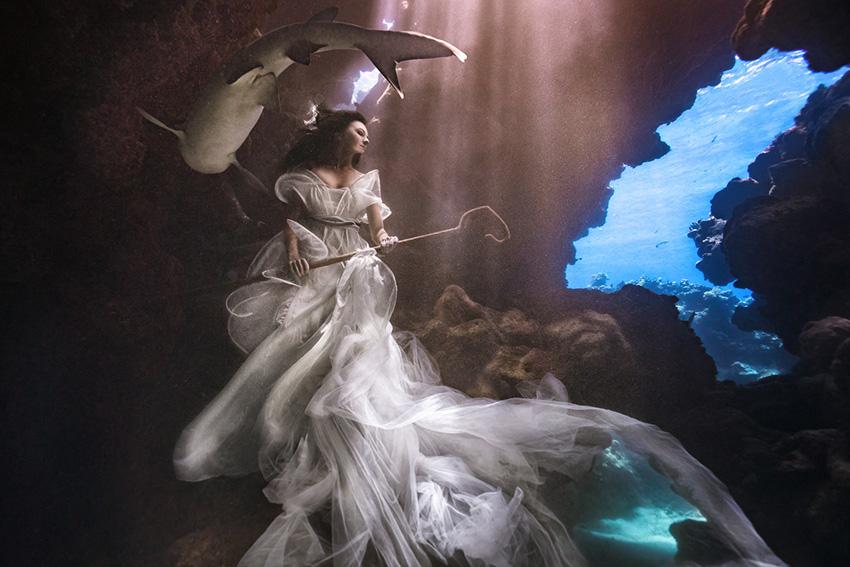 《海底世界的牧羊人与鲨共舞》
